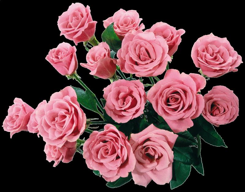 http://sc26omsk.narod.ru/rose1.png